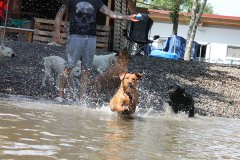 labrador-retriever-huendin-ruby-17.jpg