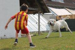 labrador-retriever-ruede-zeus-09.jpg